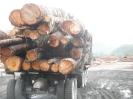 Sayward Logging_5